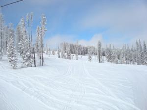 Snowy glades